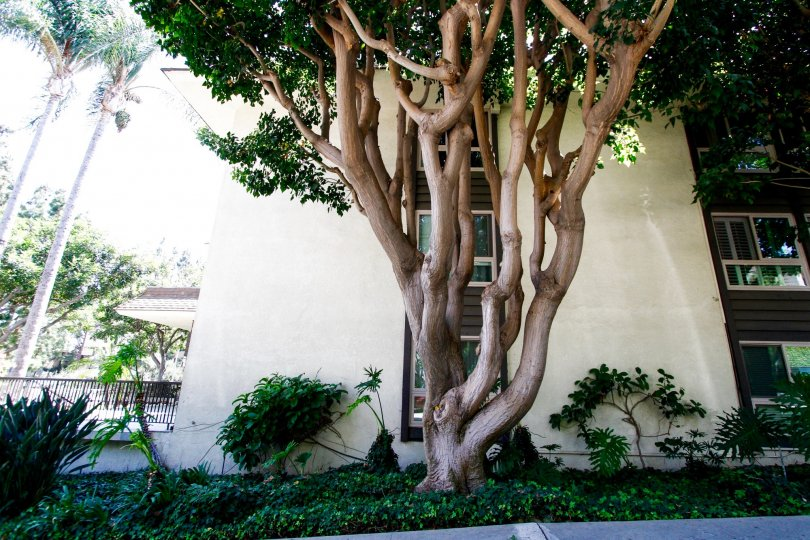 The landscaping at The Winbury in Culver City