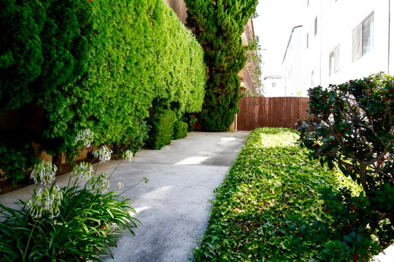The elegant landscaping around Wynnbriar in Culver City