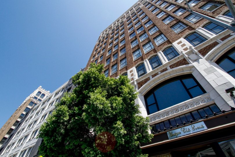The trees around Textile Buildings in Downtown LA
