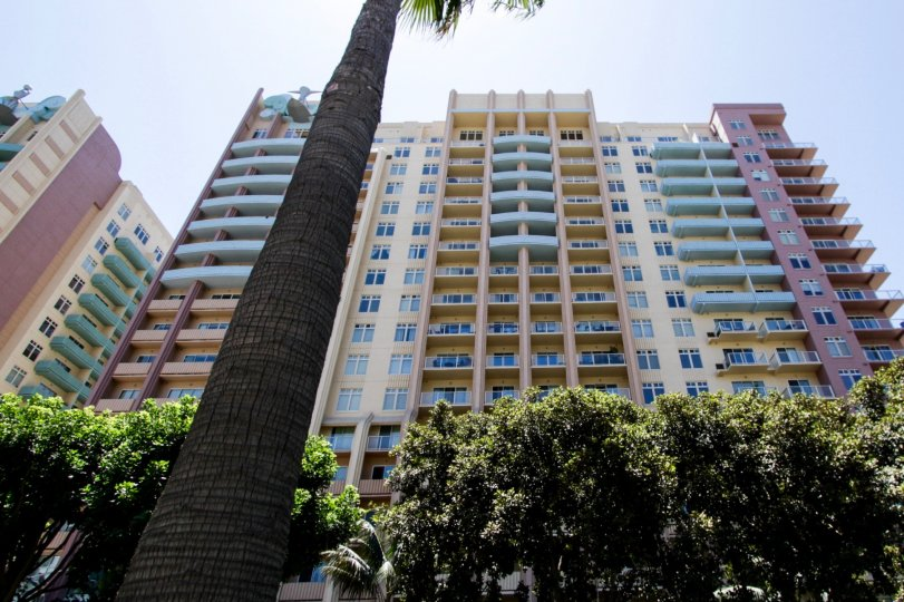Large palm trees surround the Aqua property