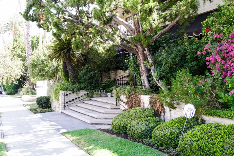 The trees that adorn the landscape in Encino Spa West