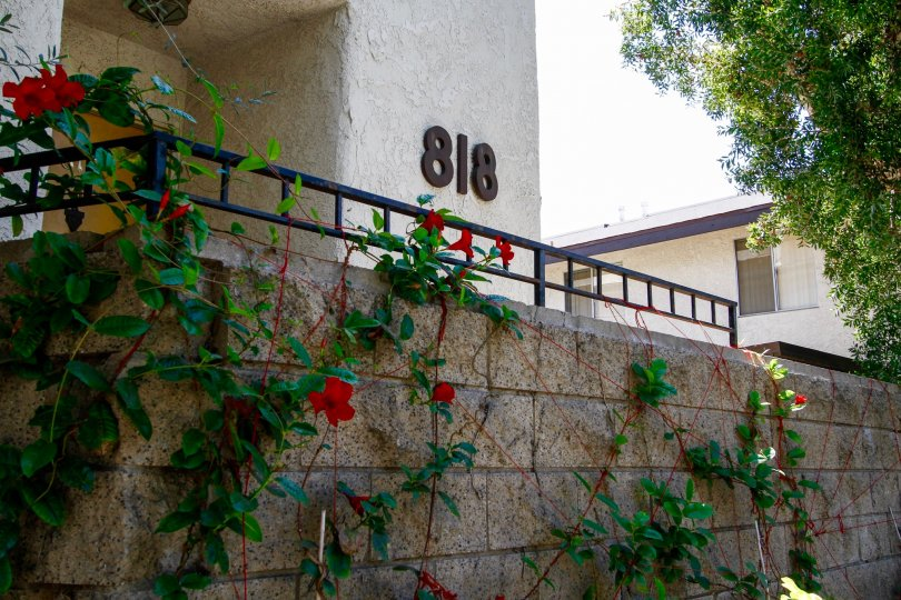 The address for the Wilshire Manor Verdugo in Glendale California