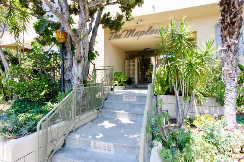 A lovely tree-lined landscaped stairway leading to the maple woods complex.