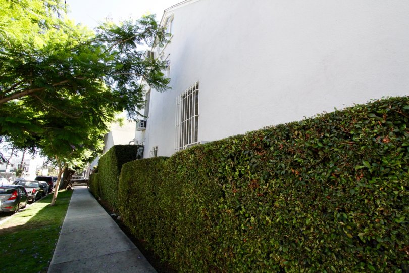 The Banner Manor sidewalk is lined with bushes at the building side and grass at the street