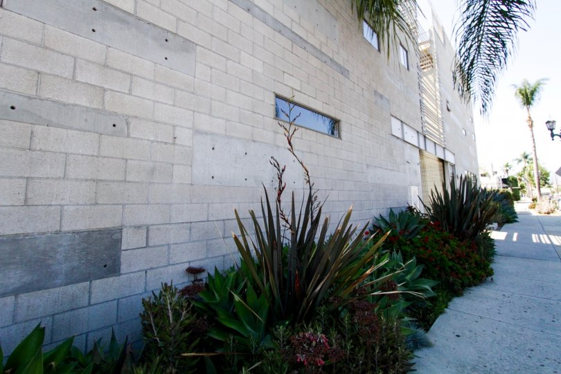 An array of plants fill the Cahuenga Lofts planters