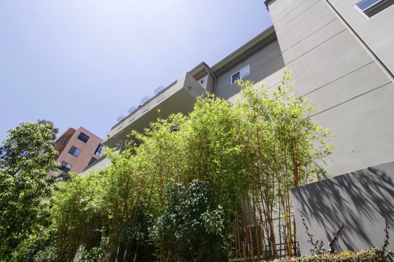The planters in front of Franklin Place are filled with bamboo and other shrubs