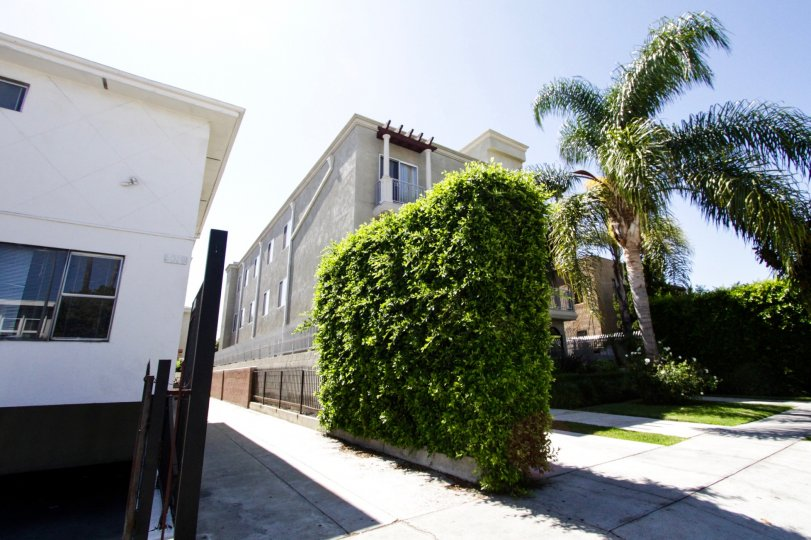 A large hedge separates Hollywood Gate Homes from the next property