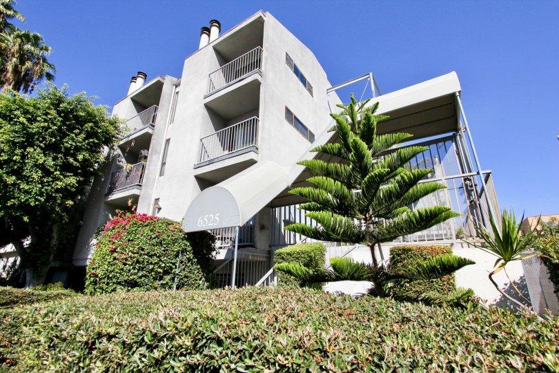 The hedges around La Mirada Condominiums