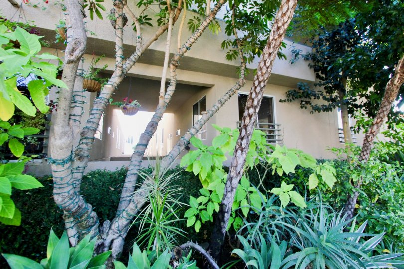The plants that are seen around Sycamore Townhomes