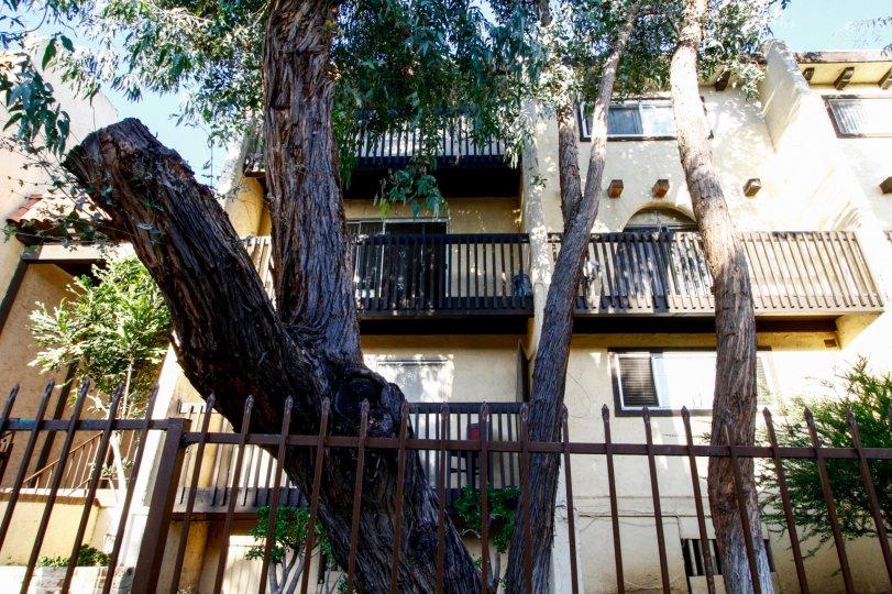 The landscaping around Eucalyptus Grove