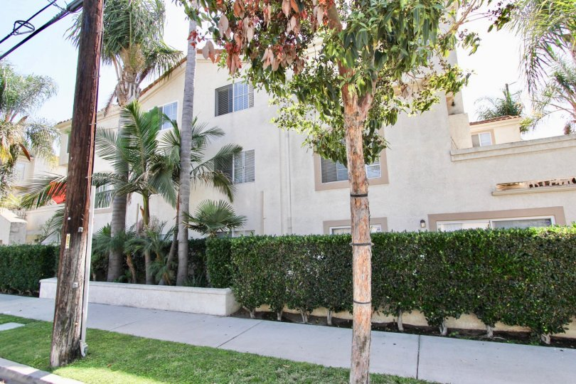 The hedges lining East Park Villas in Long Beach, California