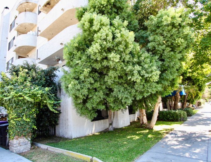 The landscaping around Elm Plaza