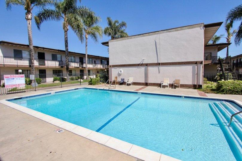 The palm trees around the pool area at Hampton Condominium