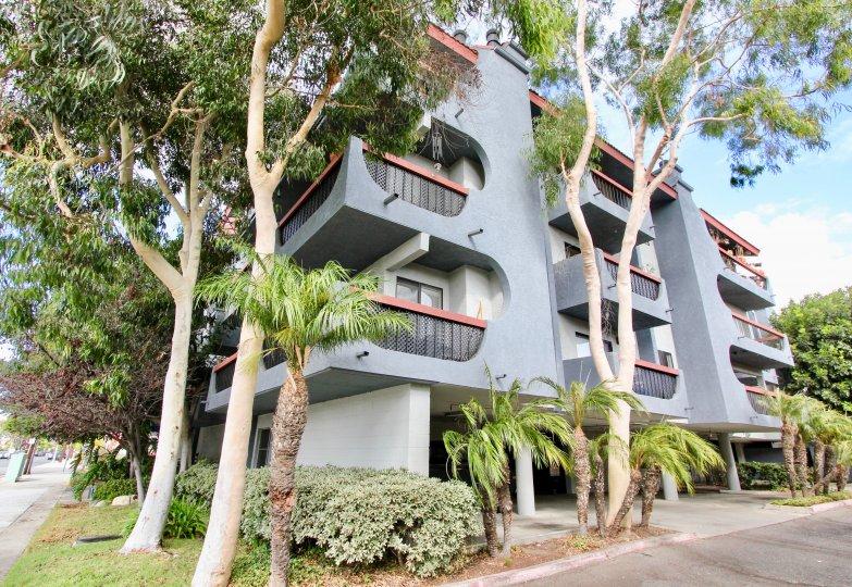Trees surrounding an apartment building in Loma Linda, Long Beach, California.