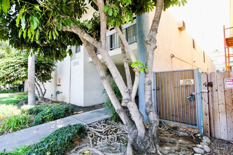 The landscaping around Long Beach Redondo West