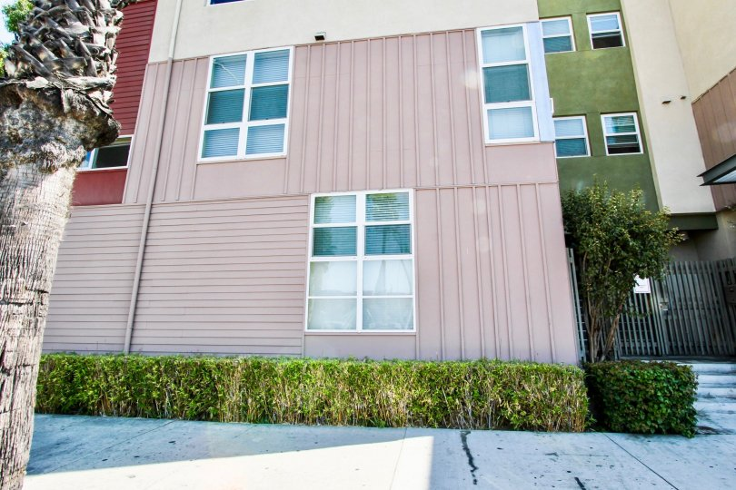The hedgs lining Olive Court in Long Beach, California