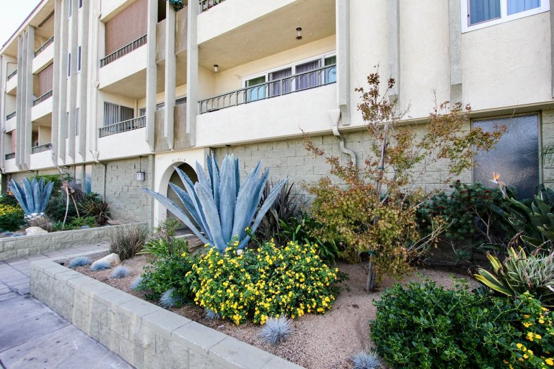 The shrubs around the Redondo Plaza Condominiums in Long Beach, California