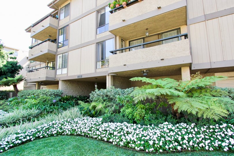 The greenery at Second Street Condominiums