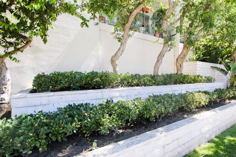 The hedges around View Carre