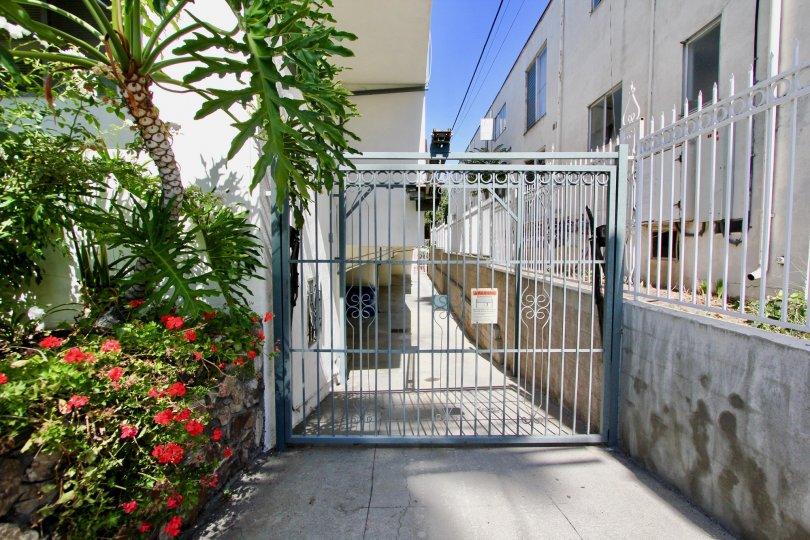 The driveway beside Finley Capri