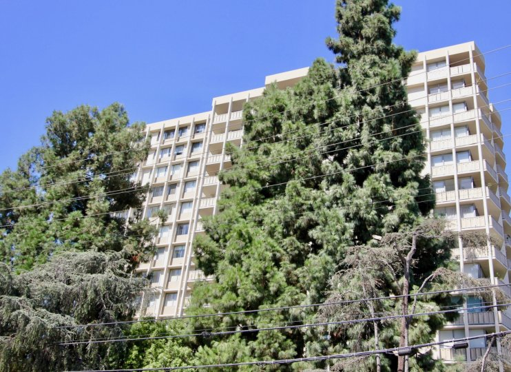 The trees in front of Los Feliz Towers