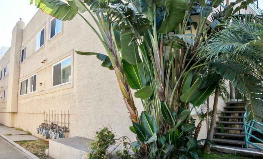 The plants around Avon Towers in Mar Vista, California