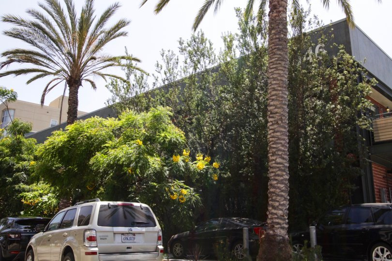 The trees providing shade at the Silicon Beach Lofts