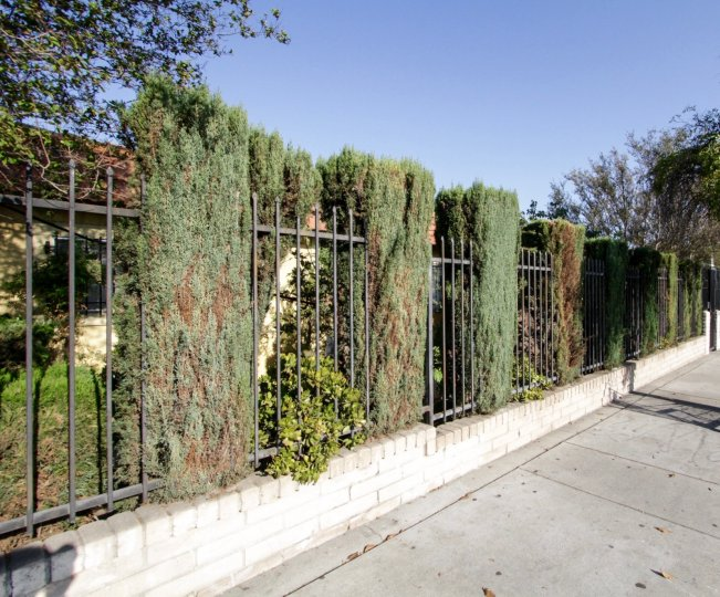 The landscaping at Laurel Canyon in North Hollywood