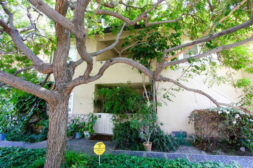 The landscaping around 385 Cliff Dr in Pasadena, California