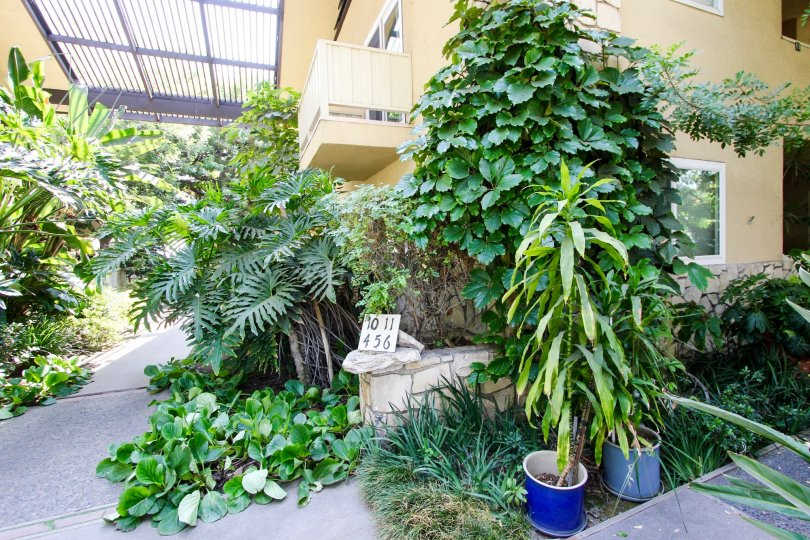 The potted plants seen around 385 Cliff Dr
