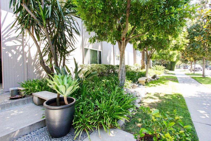 The landscaping around 900 S Orange Grove Blvd