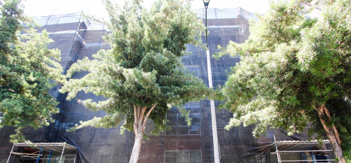 The trees around the De Lacey at Green building in Pasadena, California