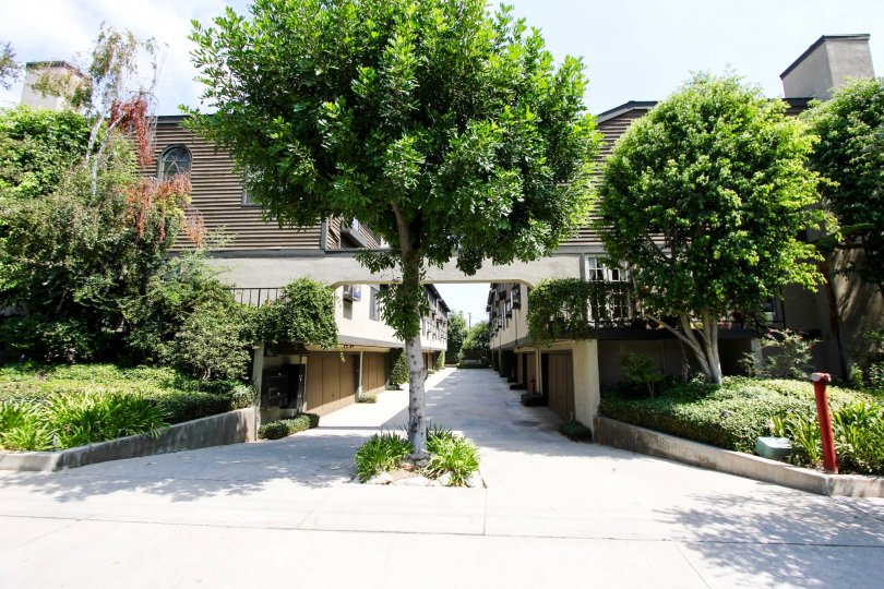 The trees around Oaks Townhomes