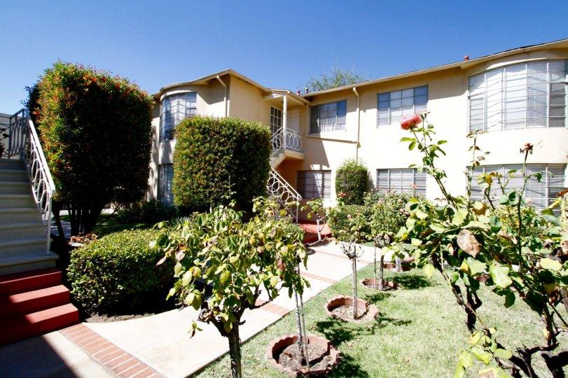 The trees surrounding the Park Lane in Pasadena, California