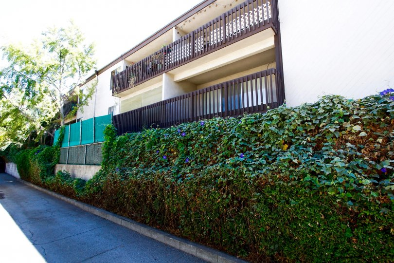 The hedges lining the Parkwood Townhomes in Pasadena, California