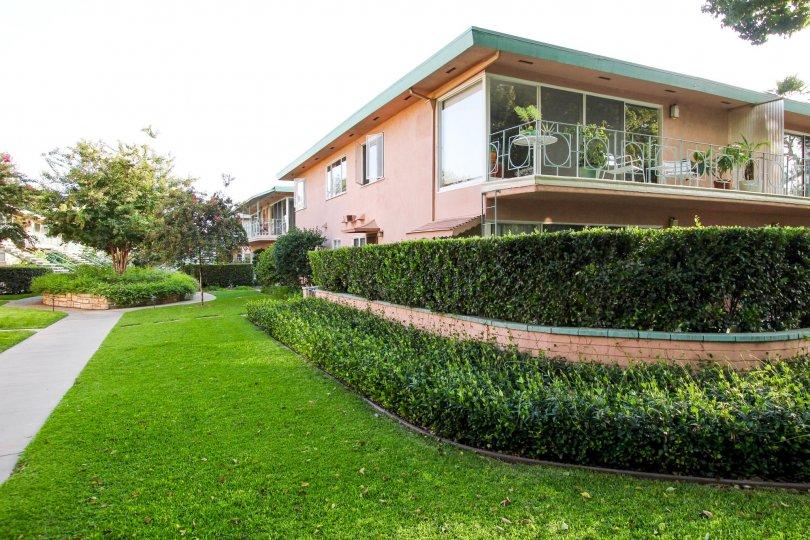 The hedges around Villa San Pasqual II
