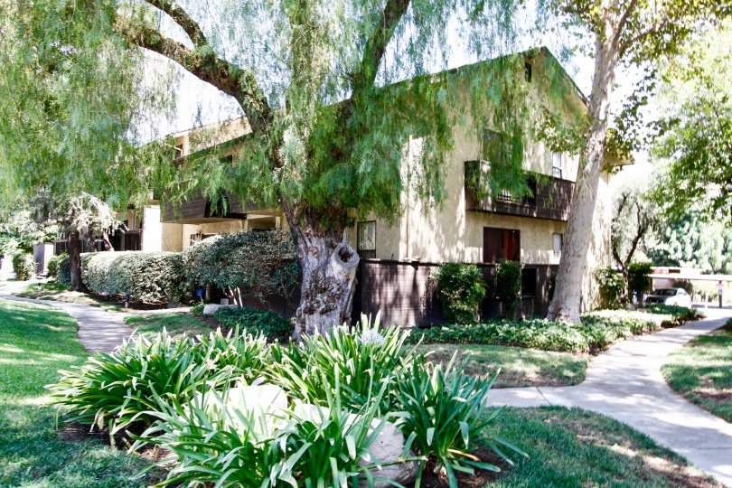 The landscaping around Peppertree