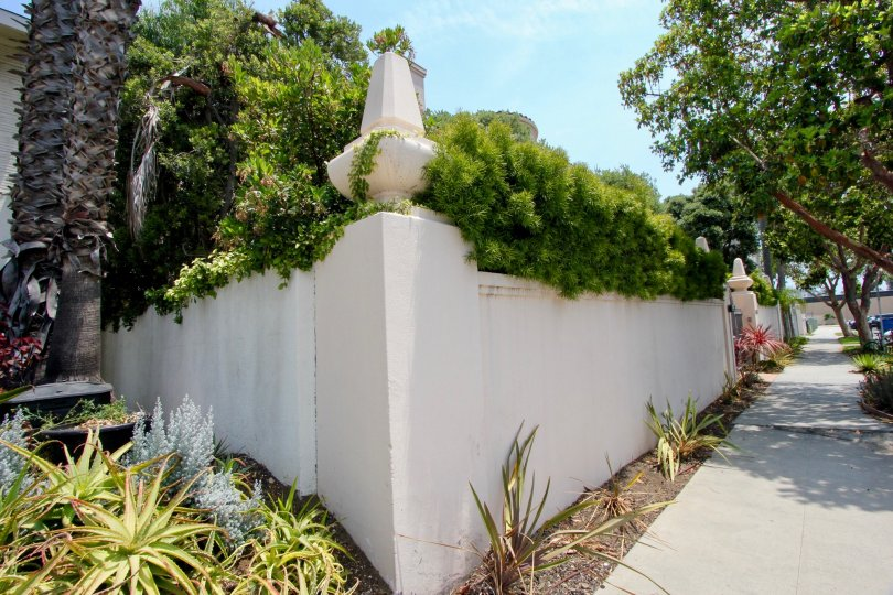 Home in santa monica with a lot of greenery and plants