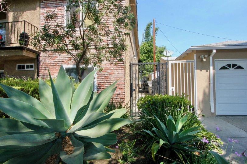 Many large plants surrounding a big home in santa monica