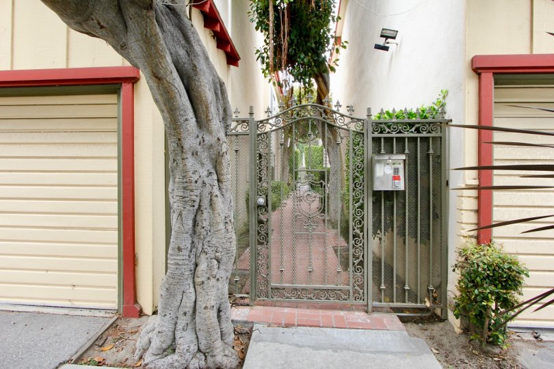 A beautiful gate and tree at the 5th St Condominiums in Santa Monica, California