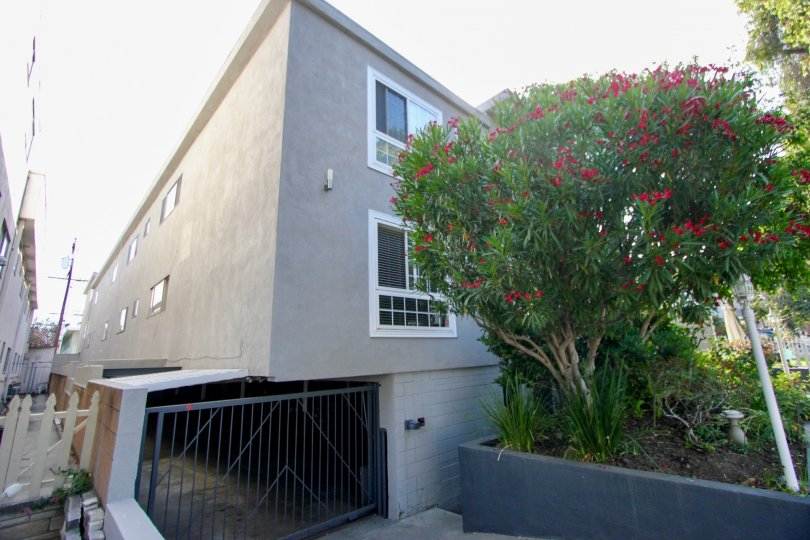 Awesome view of 944 11th St with it's floral plants, Santa Monica, California
