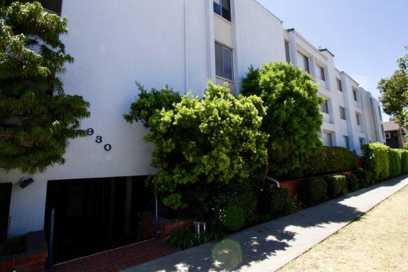 The landscaping seen around Elegance Santa Monica