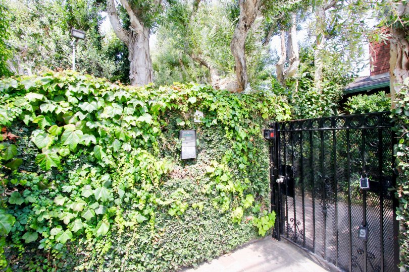 The Casitas En Santa Monica is infront of the good atmosphere condition with green leafy trees and plants