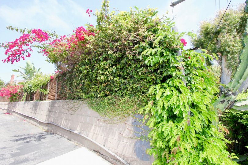 Awesome and green streets of Las Casitas En Santa Monica, california