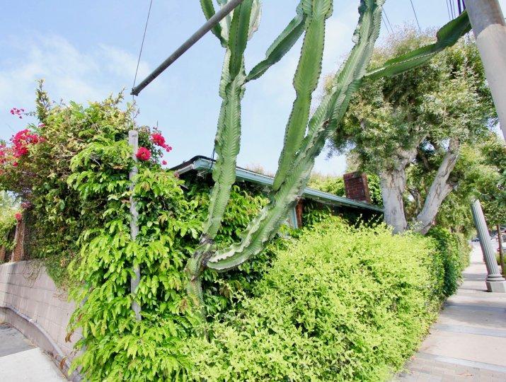 green bushes and cactus in Las Casitas En Santa Monica