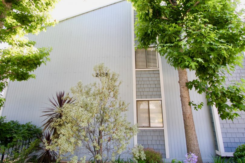 marlene manor in a secluded neighborhood in santa monica, older building in fantastic newly updated condition in a park like setting, sure to please a family or empty nester