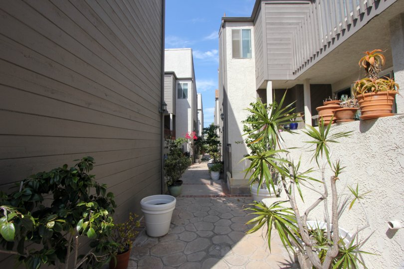 A sunny day at a valley in the Rustic Glen's community in Santa Monica, CA