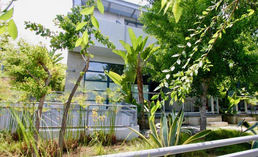 Great houses of Santa Monica Art Lofts with their green paradise, Santa Monica, California