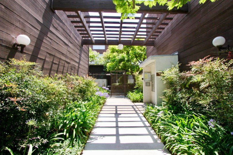 Wooden walls in santa monica with many plants inside a home