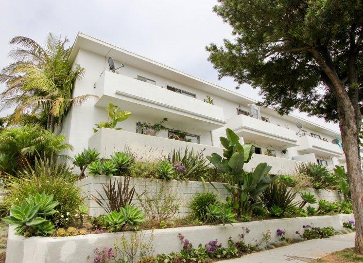A captivating garden of succulents in Santa Monica